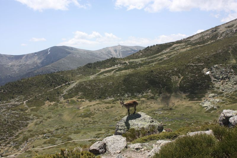 Penalara Natural Park.  18 May 2012.